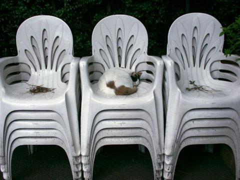 椅子で熟睡