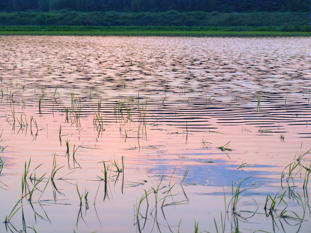 淡空と水田