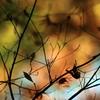 秋の影絵2010