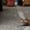 中華街の猫 (関西オフ会)