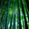 bamboo×bamboo