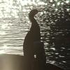 水鳥のシルエット