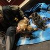 サンミッシェルの物乞いと犬猫