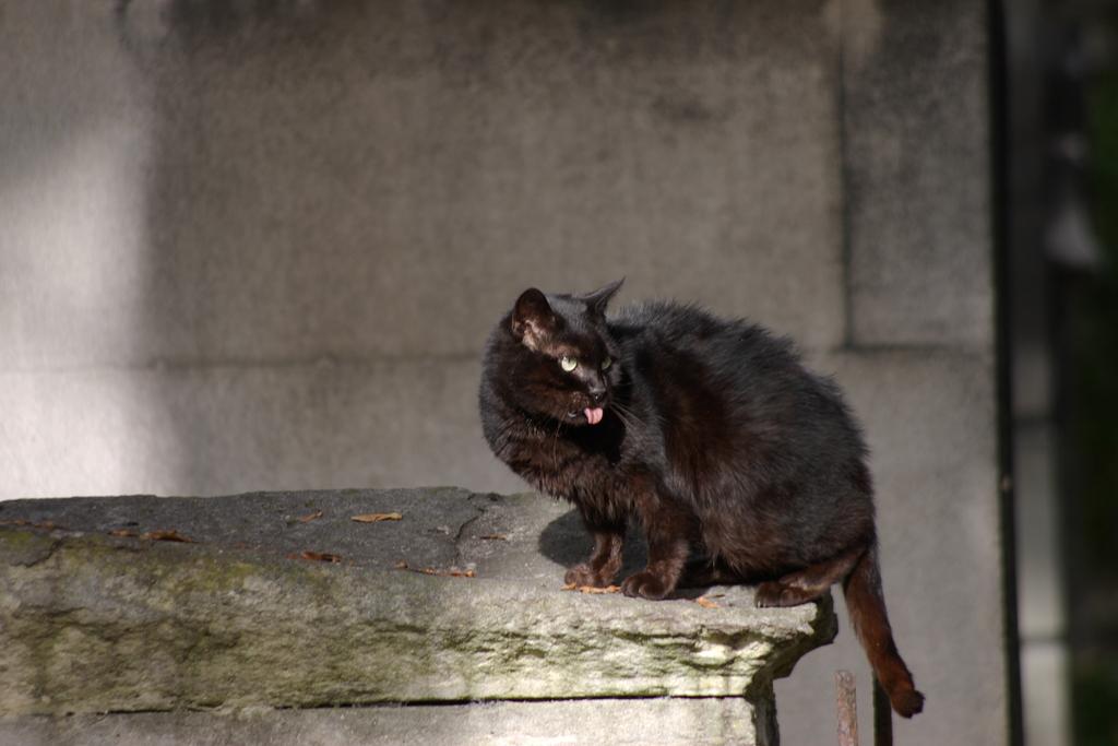 アカンベー猫
