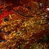 天竜峡の紅葉