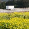 菜の花と中国道