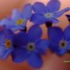 青?紫?の小さな花