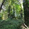 密林とフクロウ