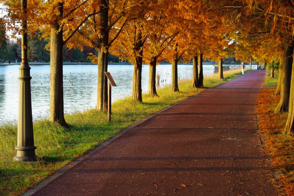 秋の散歩道(三郷公園にて)