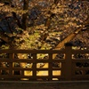 夜桜@いたばし