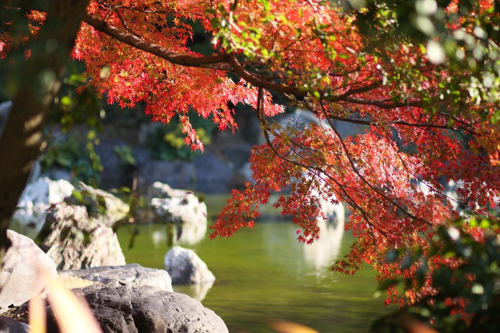2008 紅葉 万博公園 6