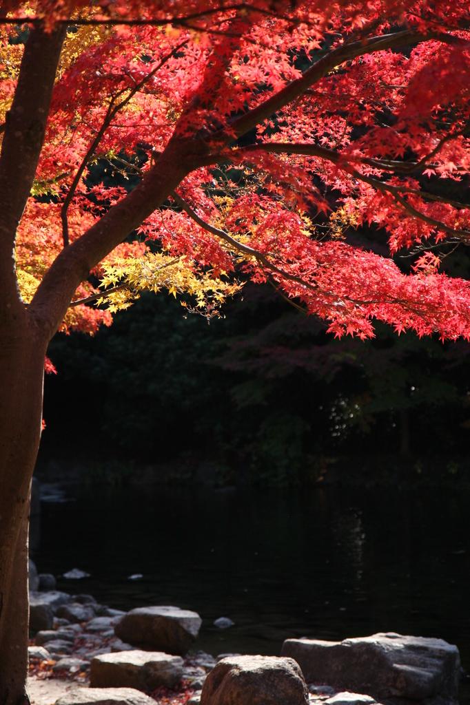 2008 紅葉 万博公園 3