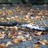 葉っぱの布団の上の枝