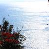 丘からの海