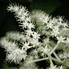 白い野の花