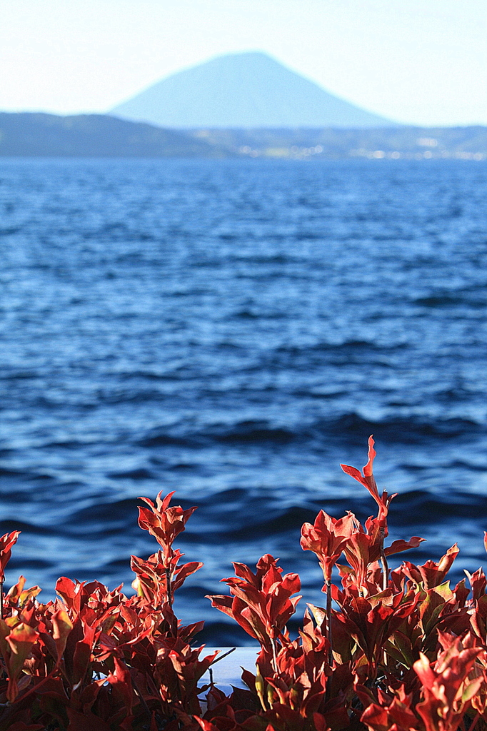 湖边的红花