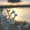 花と花寿波島