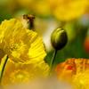花蜜めぐり