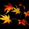 木漏れ日の紅葉1