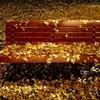 黄葉のベンチ