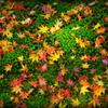 秋はひと時の夢
