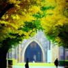 黄葉の銀杏の木の下で
