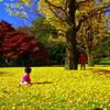 銀杏の木の可愛い妖精・・