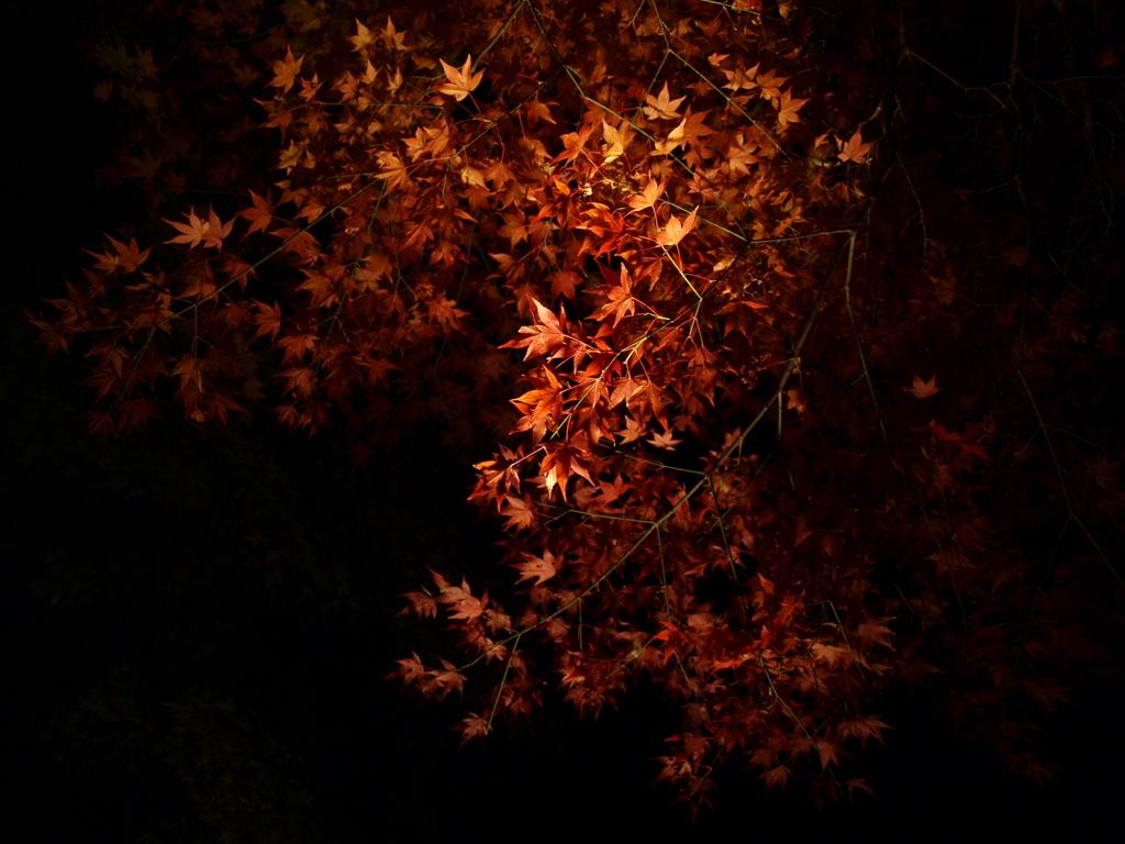 闇夜の紅葉