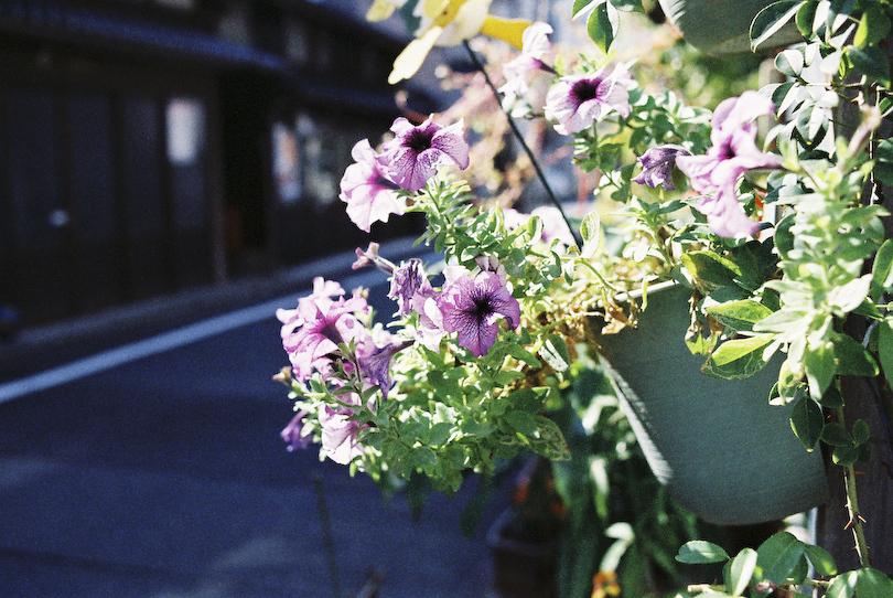 街に咲く花