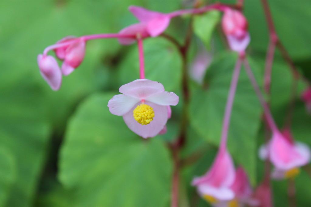 グミのような花