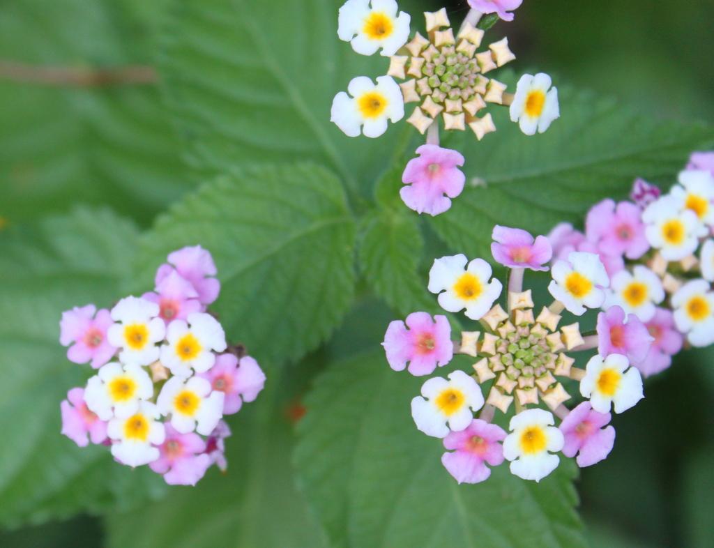 ピンクの不思議な花