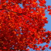 道路沿いの紅葉