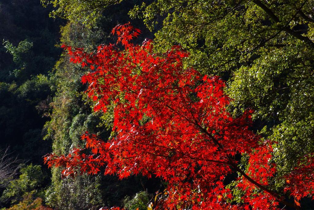黒髪山の紅葉