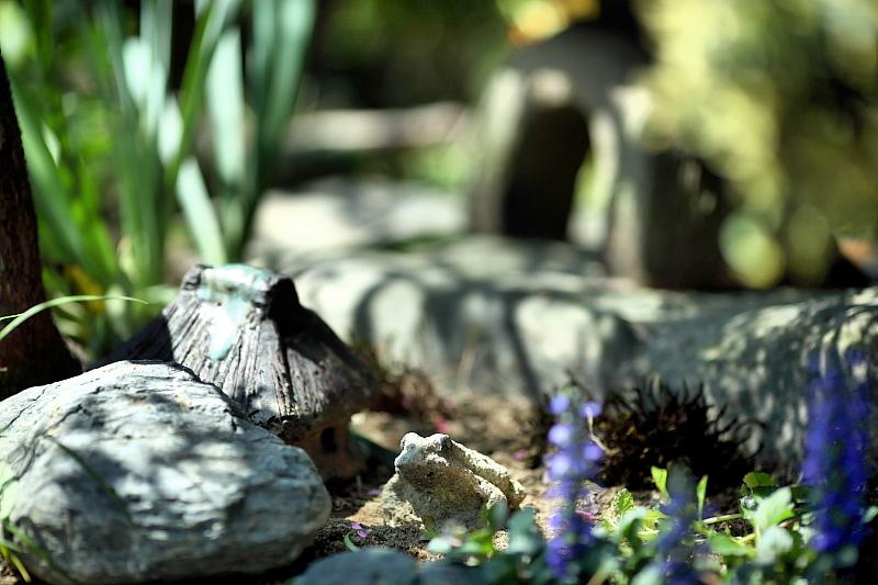 庭にいた蛙と家