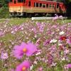 姫新線とコスモス畑