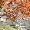 紅葉と栗栖の町