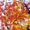 Autumn tint