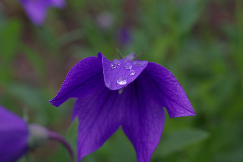 drop on purple