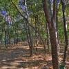 林の中(HDR)
