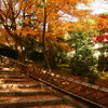 秋色WAY