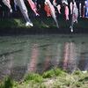 川を泳ぐ鯉のぼり