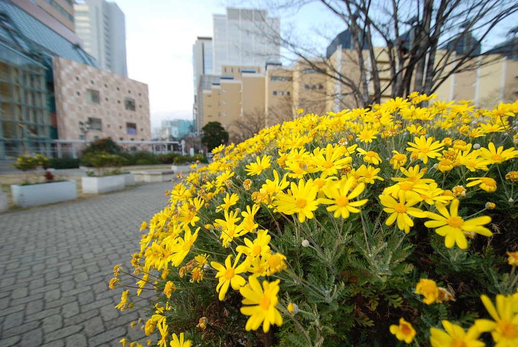 神戸ハーバーランド3