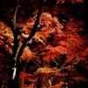 A red season