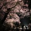 慈光寺の夜桜 宇都宮