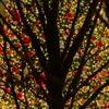 もうひとつのクリスマスツリー
