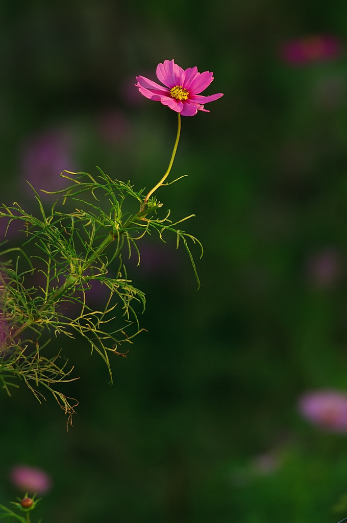Cosmos in the pin-light
