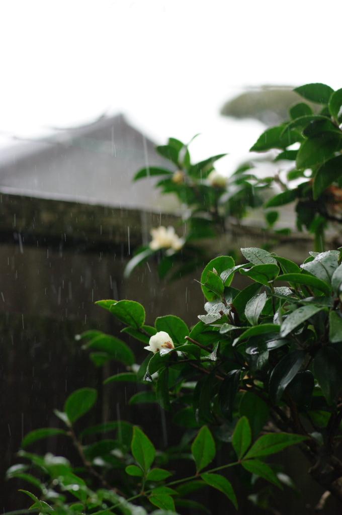 急な雨に降られて