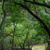 雨上がりの春日原生林