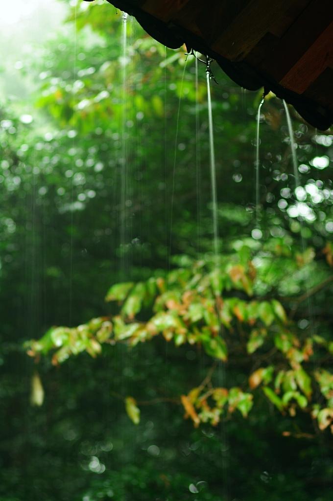 雨音を聞きながら