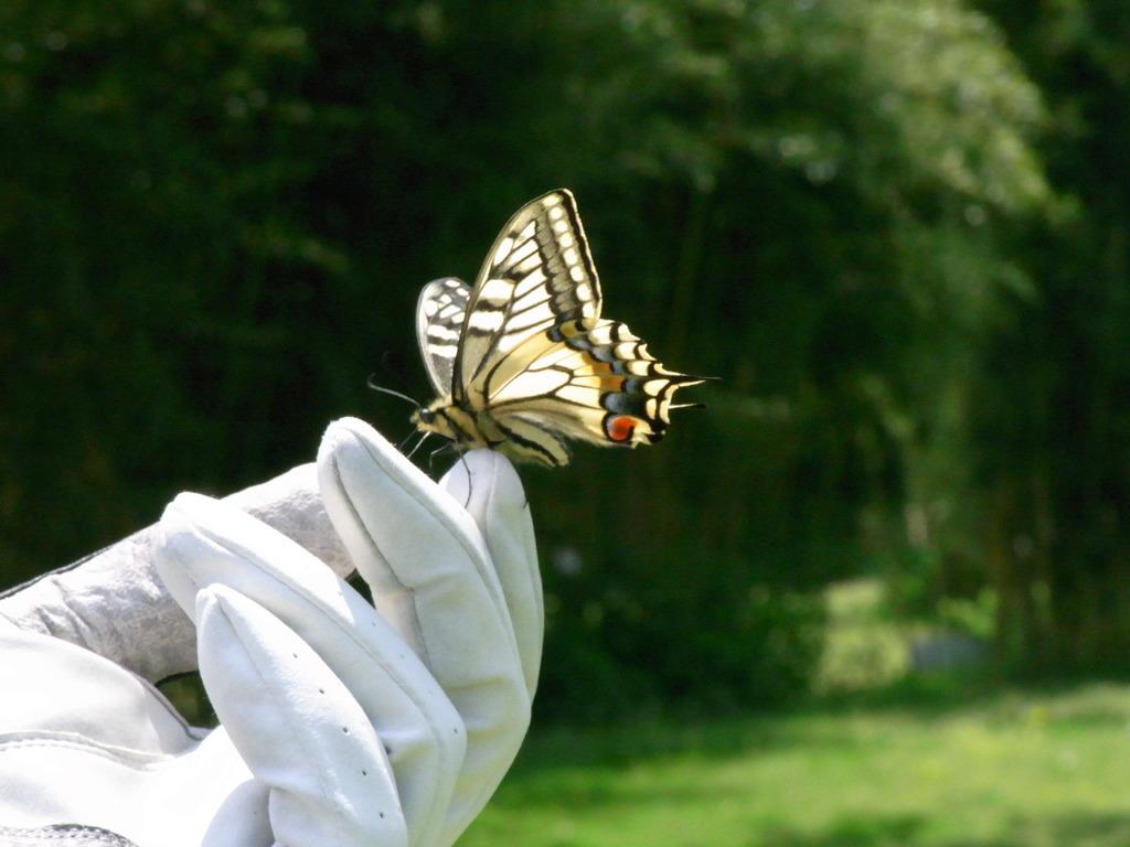 蝶々が止まった